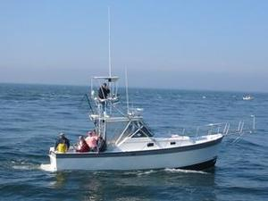 Used Luhrs 30 Luhrs Alura Downeast Fishing Boat For Sale