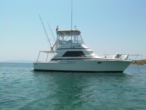 Used Bertram 37 Convertible Fishing Boat For Sale